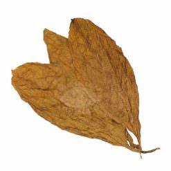 CT Shade Leaf 2006 crop (American), 1lb.