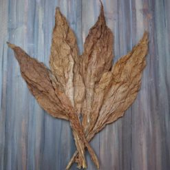 Bay Fronto Leaves in fan pattern