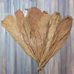 Corojo Variety Tobacco, Oscuro Color, Wrapper Grade