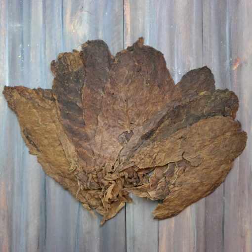 Criollo 98 Variety Tobacco, Viso Priming
