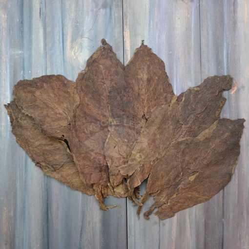 Cibao Valley Corojo Tobacco, Ligero Priming