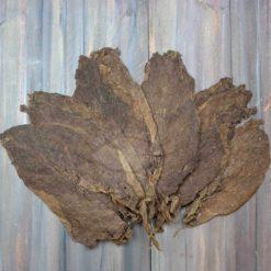 Piloto Cubano Tobacco, Seco, flower pattern